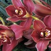 How to solve cymbidium problems