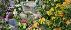 Fairchild Orchid Event