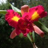One of Eduardo's Orchids