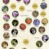 compendium_of_orchids