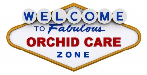 Orchid Care Zone Welcome!