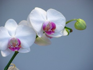 Orchid Fertilizers