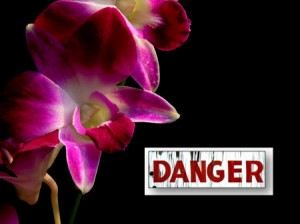 Orchid Care Warning Signs