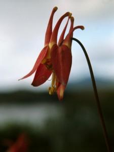 Successful Orchid Propagation