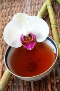 Orchids as Medicine