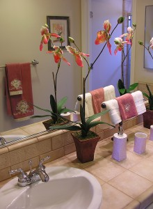 Orchid Blooming Information