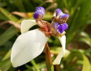 Pollinating Orchids