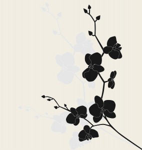 Elusive Black Orchid