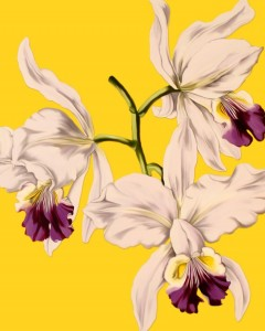 Orchid Print by Juliana Swenson