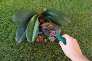 Repotting-An-Orchid